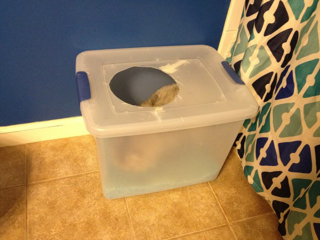 DIY Cat Litter box - Charleston Crafted