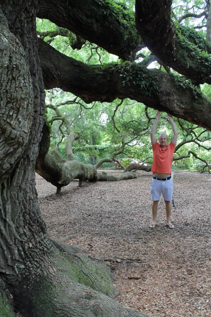 Angel Oak Tree, Charleston SC- Charleston Crafted