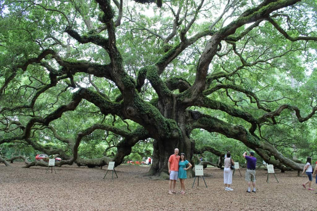 Angel Oak- Charleston Crafted