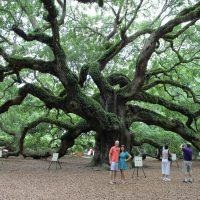 Charleston's Angel Oak