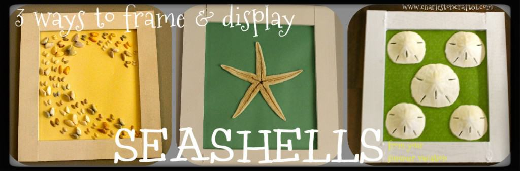 Three Ways to Frame and Display Sea Shells from your summer vacation - Charleston Crafted