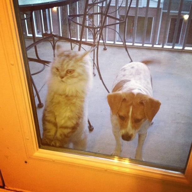 Cesar and cici