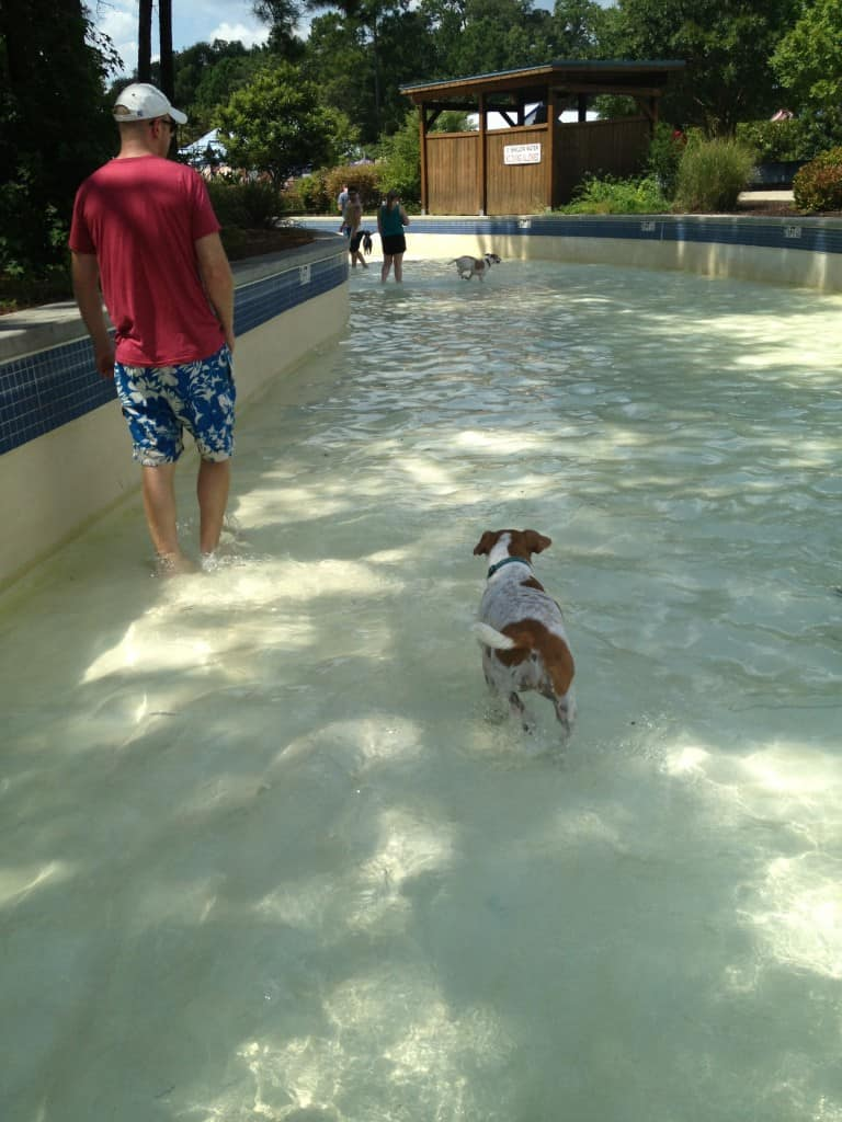 Dog Day at Whirlin Waters - Charleston Crafted