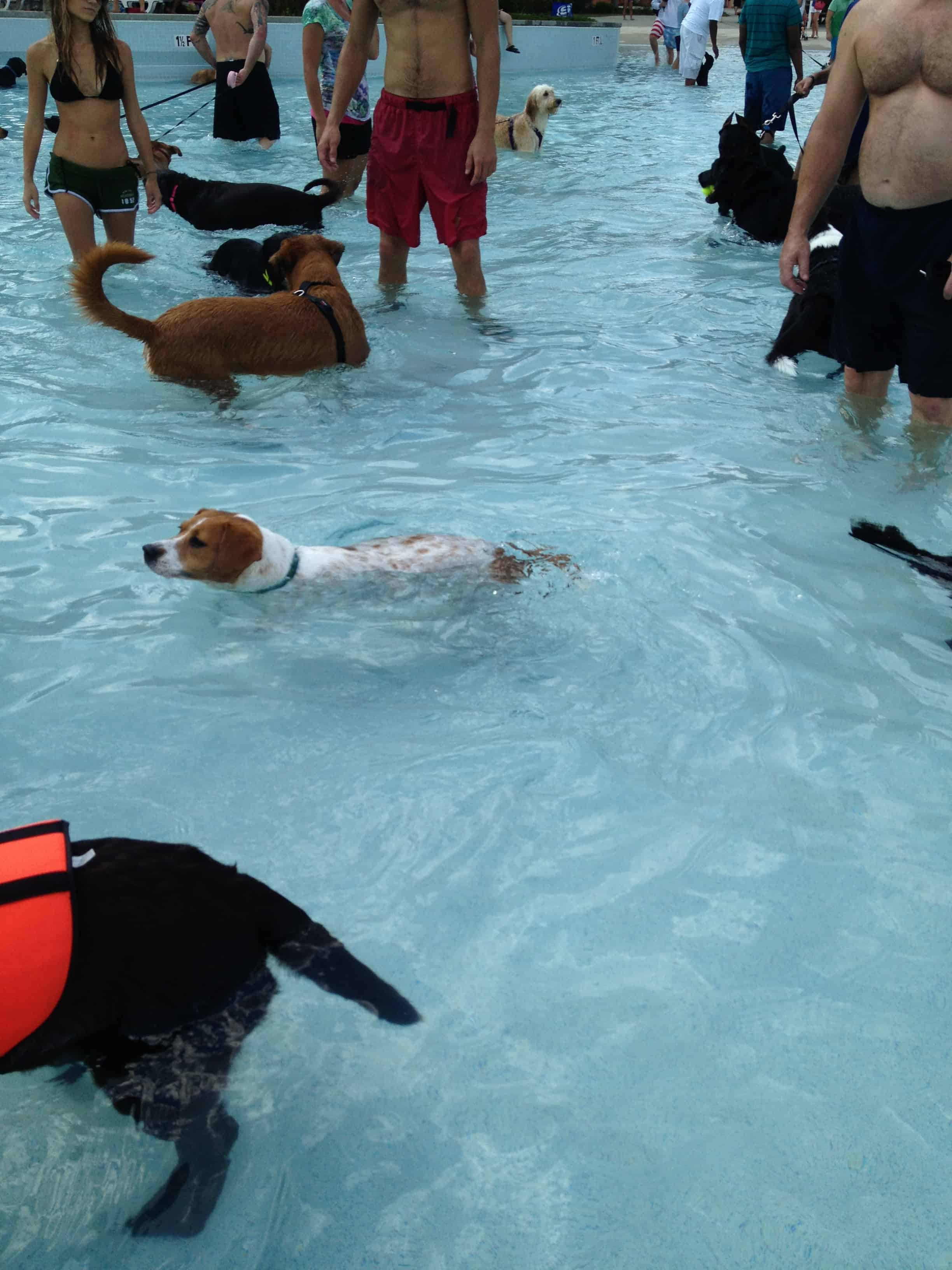 Dog Day at Whirlin Waters Water Park!