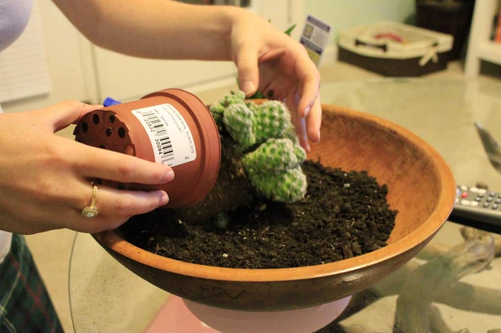 DIY Paint Dipped Wooden Bowl Cactus Garden - Charleston Crafted