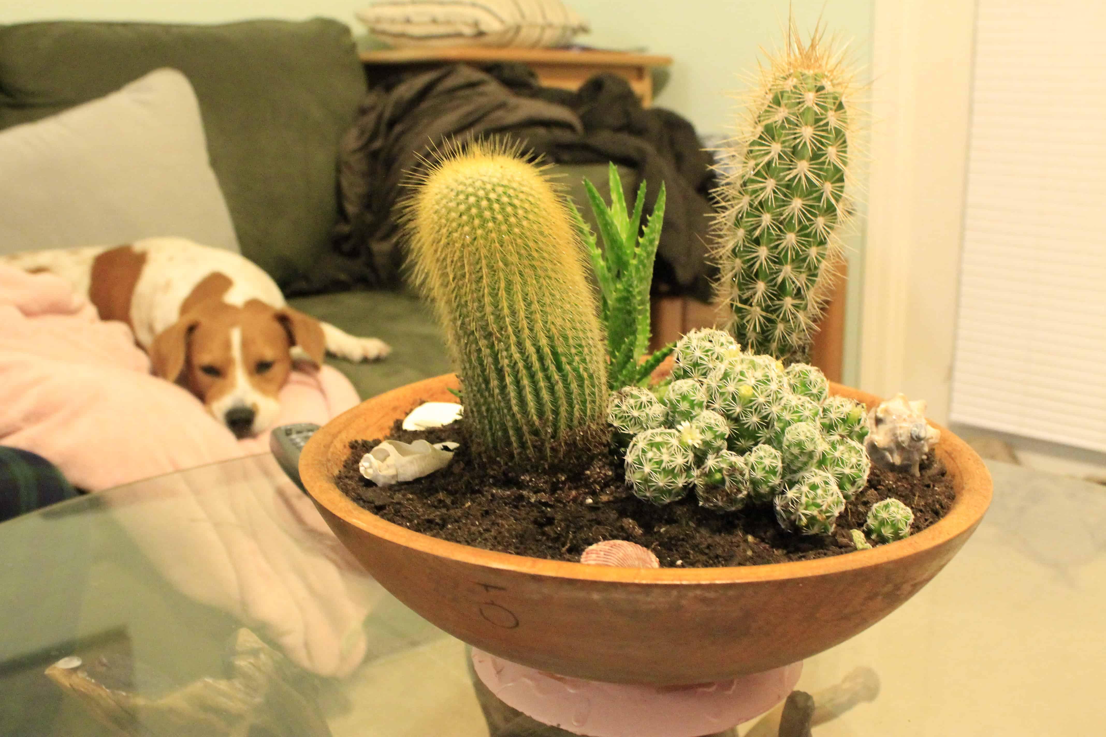 A Dipped Wooden Bowl Cactus Garden