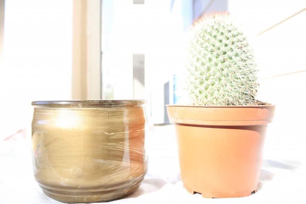 DIY Fun Cactus Housewarming Gift