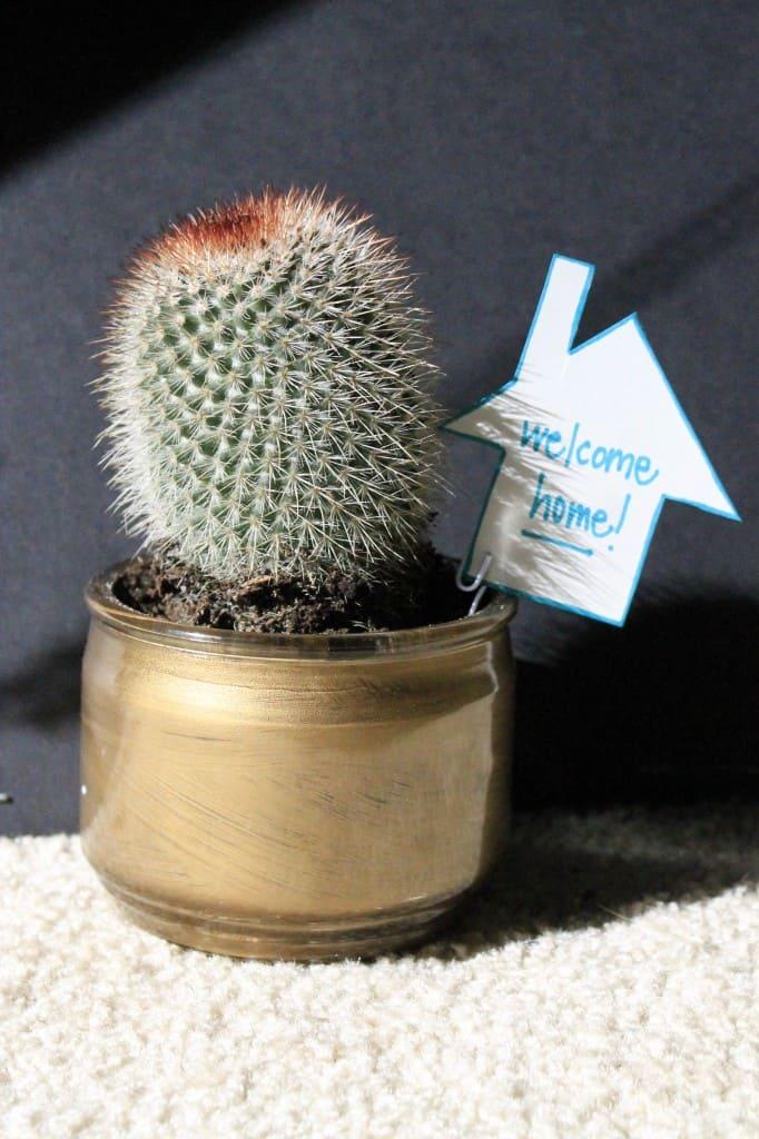 DIY Housewarming Cactus