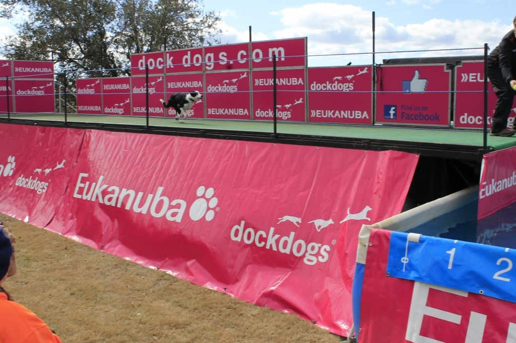 Dock Dogs at SEWE - Charleston Crafted