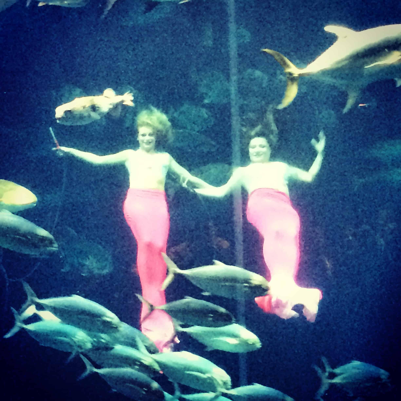 South Carolina Aquarium Archives Charleston Crafted