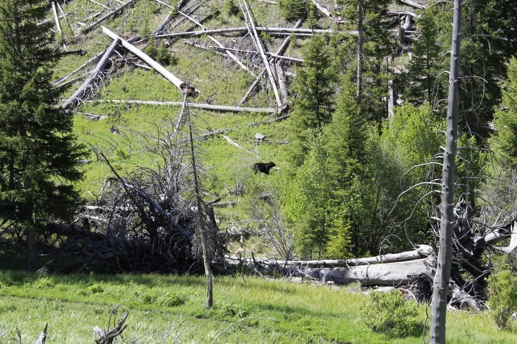 Yellowstone National Park - Charleston Crafted