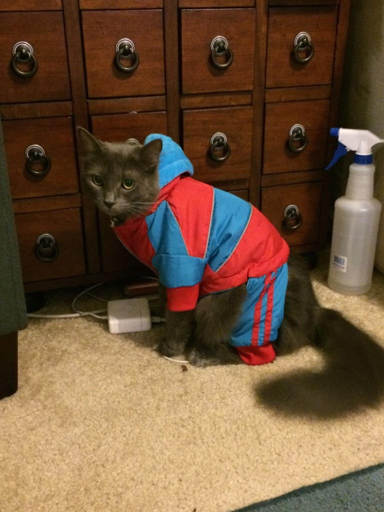 Cat in a Tracksuit - Charleston Crafted