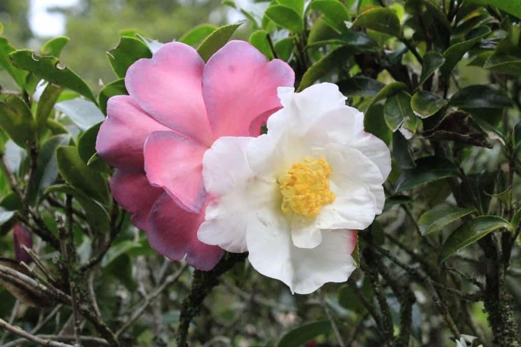 101 in 1001 Magnolia Plantation - Charleston Crafted
