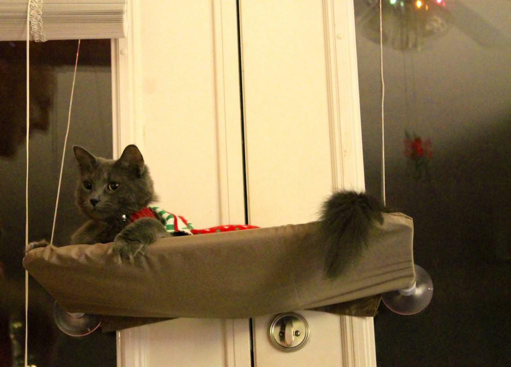 Bear in her hammock