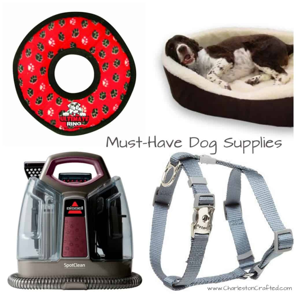 Must Have Dog Gear - Charleston Crafted