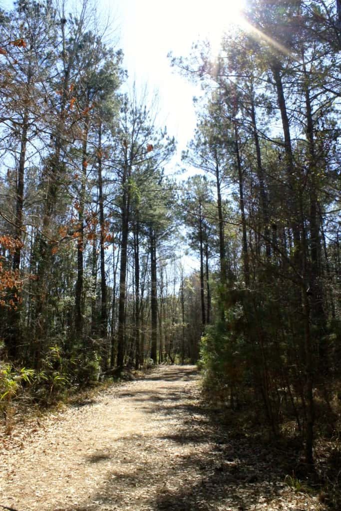 Laurel Hill County Park - Charleston Crafted