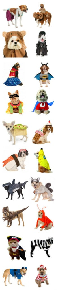 20 awesome pet halloween costumes