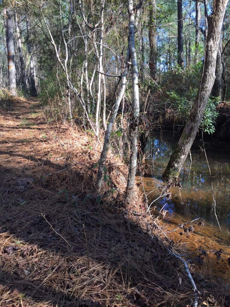 Francis Marion Swamp Fox Trail - Charleston Crafted