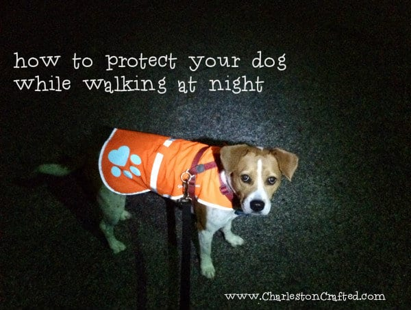 How To Protect Your Dog While Walking At Night Charleston Crafted