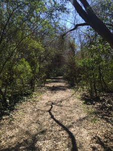 Patriot's Point Nature Trail - Charleston Crafted