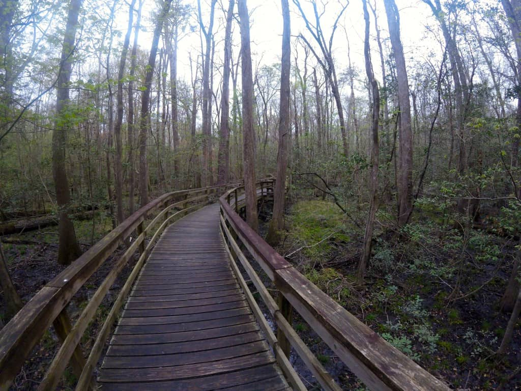 Congaree National Park - Charleston Crafted