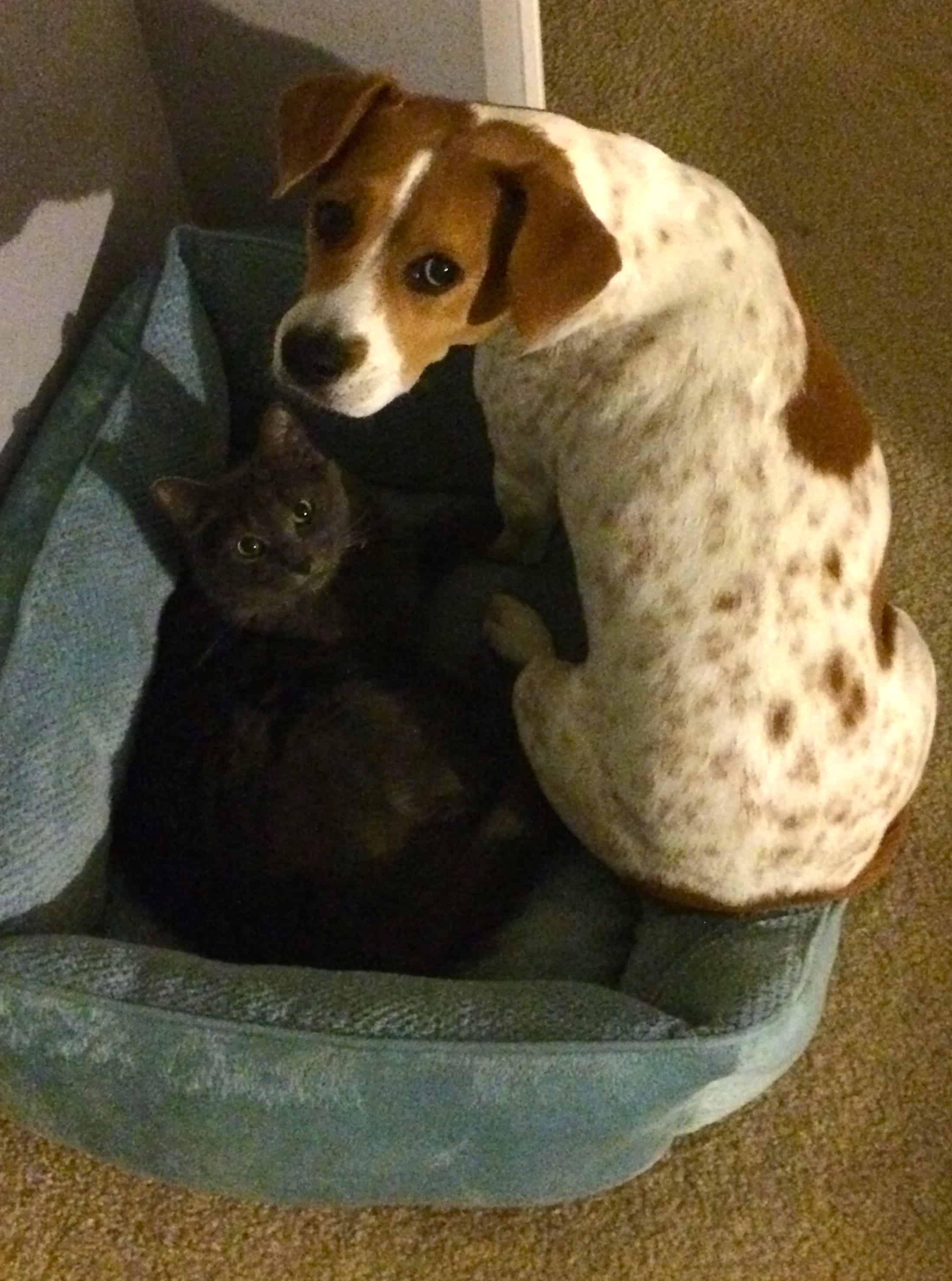 A Diy Pet Bed Tutorial Love Bunks