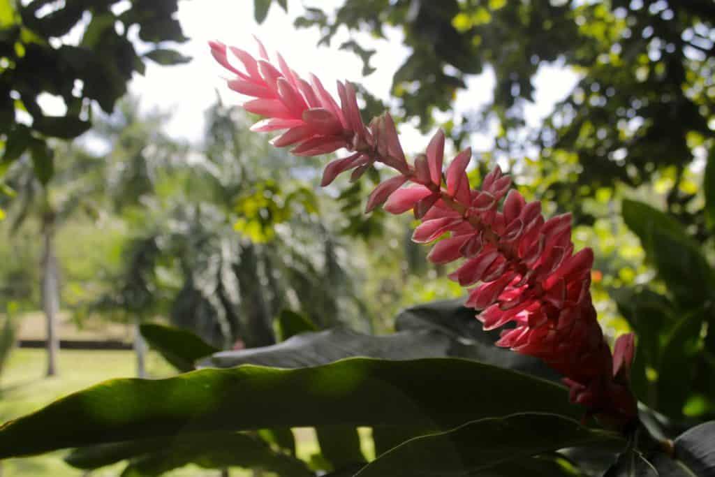 Poipu, Kauai, Hawaii - Charleston Crafted