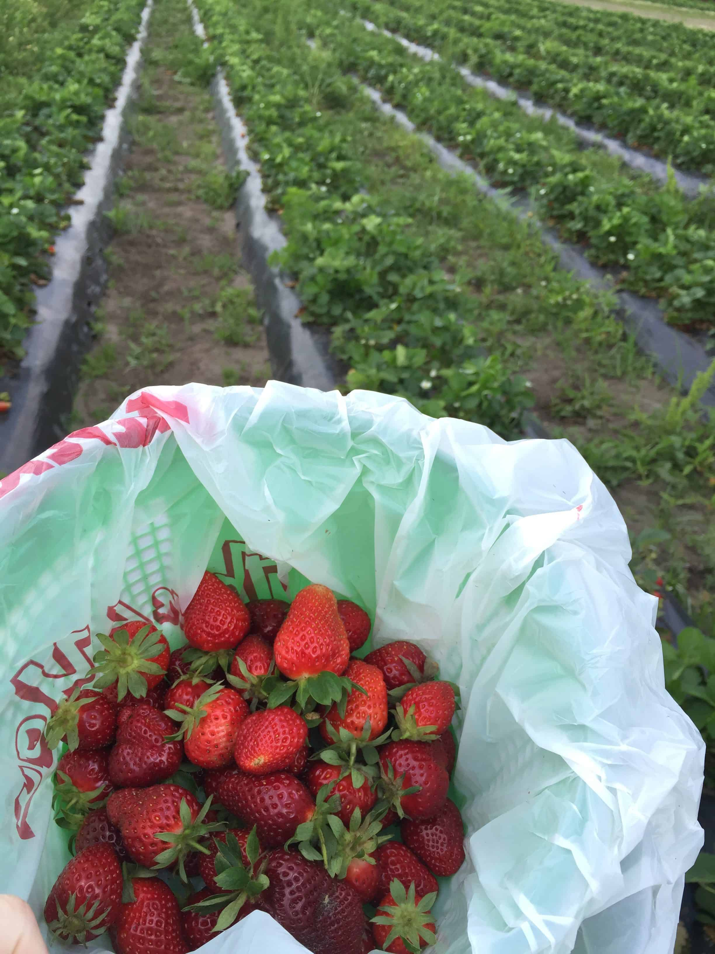 101 in 1001: Strawberry Picking (for my birthday!)