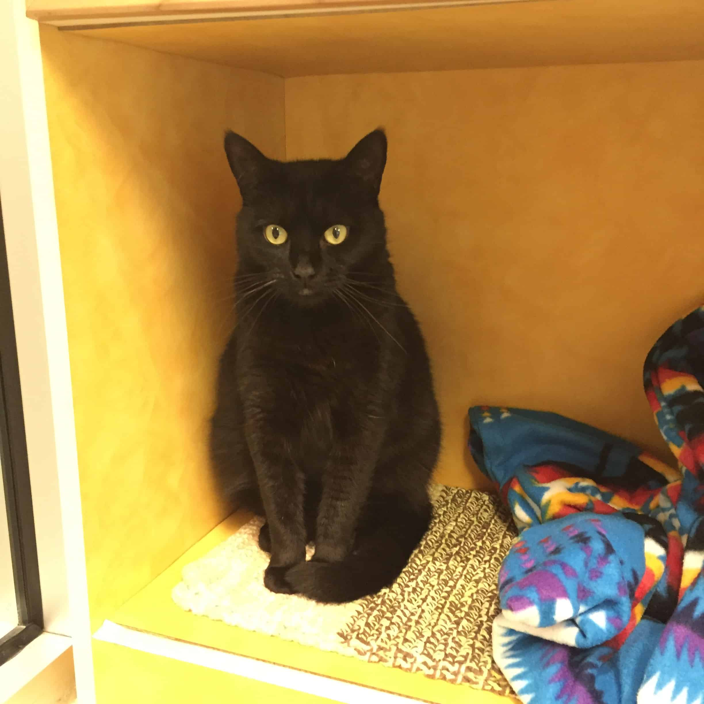 Pet Helpers Cat Rooms - Charleston Crafted