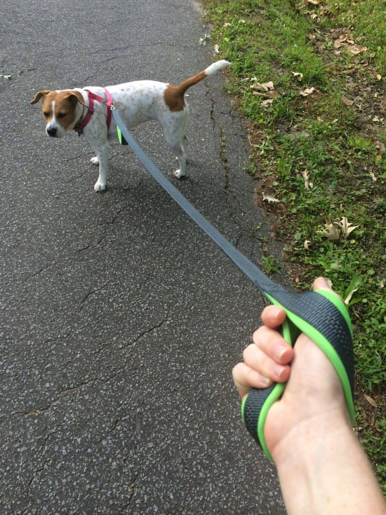 Mighty Paw HandleX2 Dog Leash - Charleston Crafted