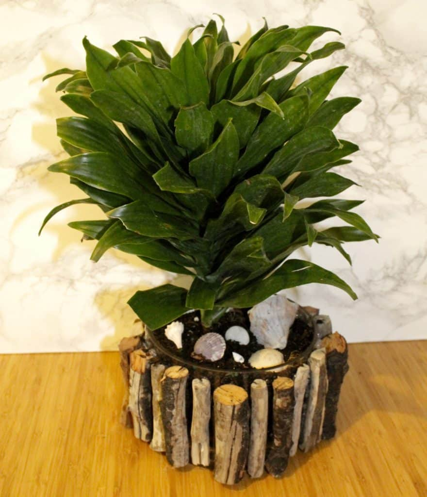 Tropical DIY Driftwood Plant Pot Update - Charleston Crafted