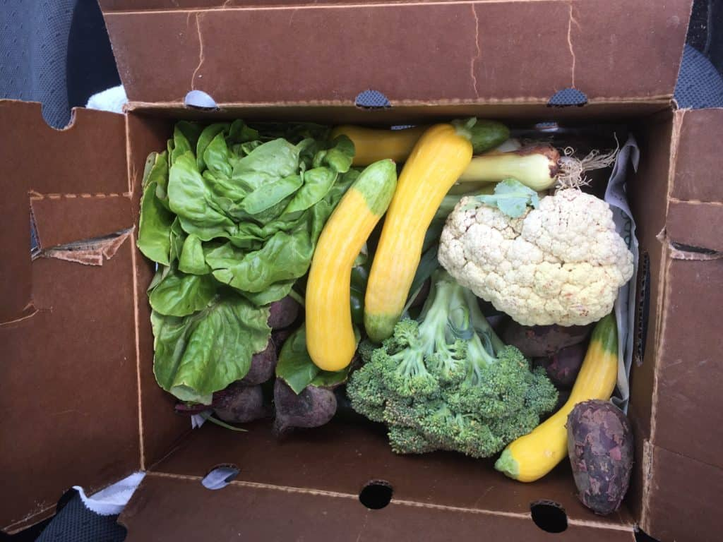Spring Summer CSA Gruber Farms Recap - Charleston Crafted