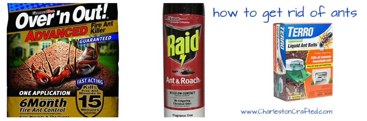 3 Ways to Get Rid of Ants
