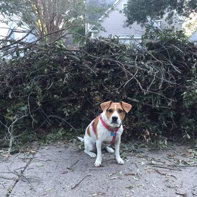 Hurricane Matthew Aftermath - Charleston SC - Charleston Crafted