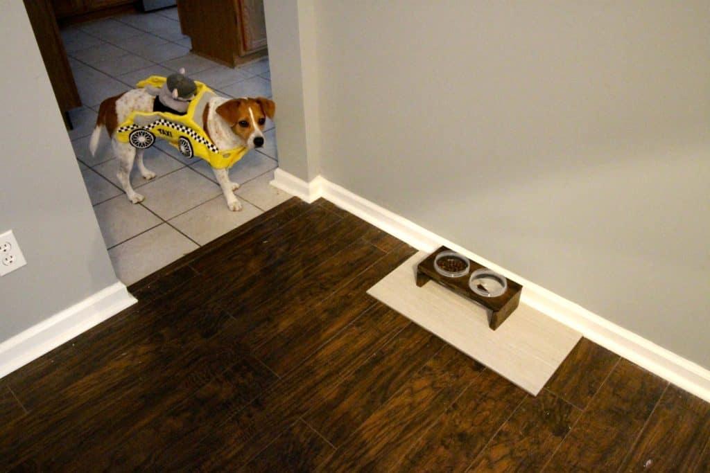 DIY Pet Feeder - Charleston Crafted