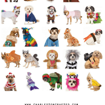 25 Pet Costumes Under $20 on Amazon Prime