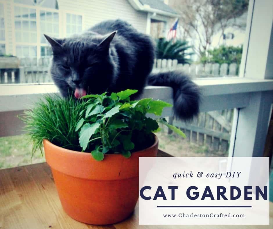 DIY Pet Grass & Cat Nip Cat Garden