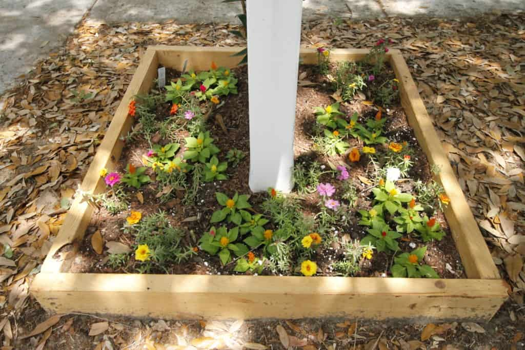 All of the Planting Going on in our Yard - What's Working & What's Not - Charleston Crafted