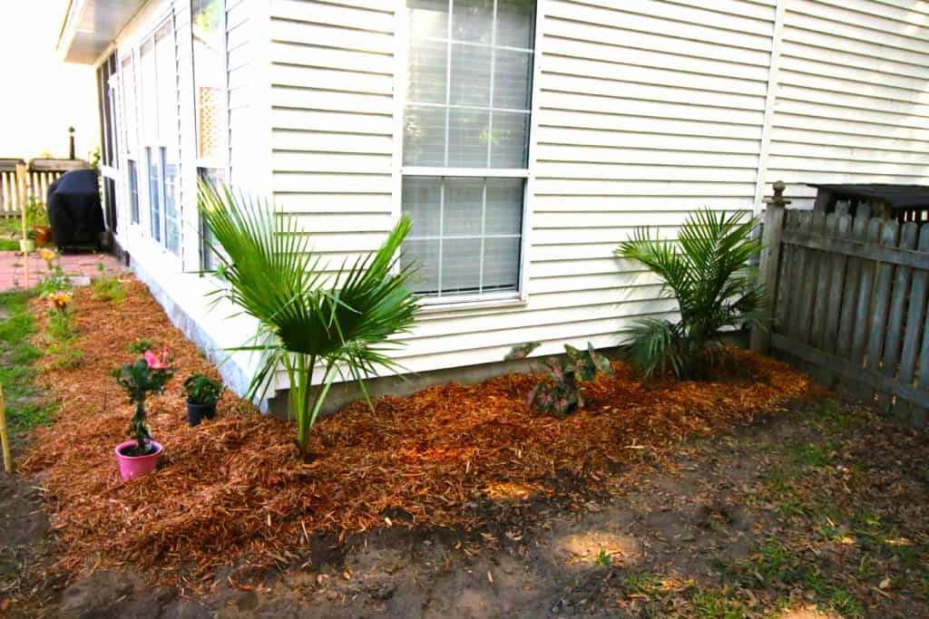 Tropical Yard Update - Charleston Crafted