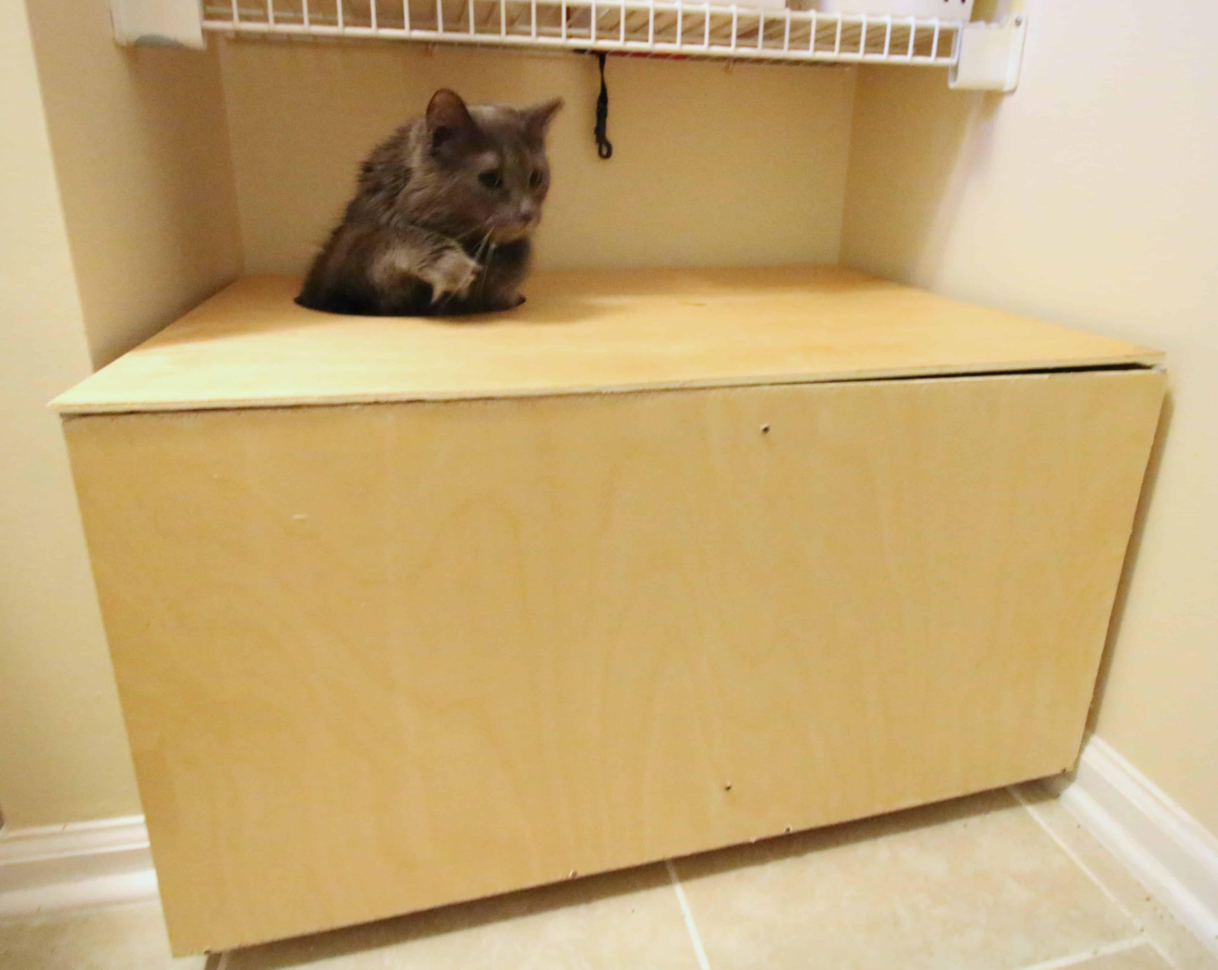 Diy Wooden Top Entry Cat Litter Box