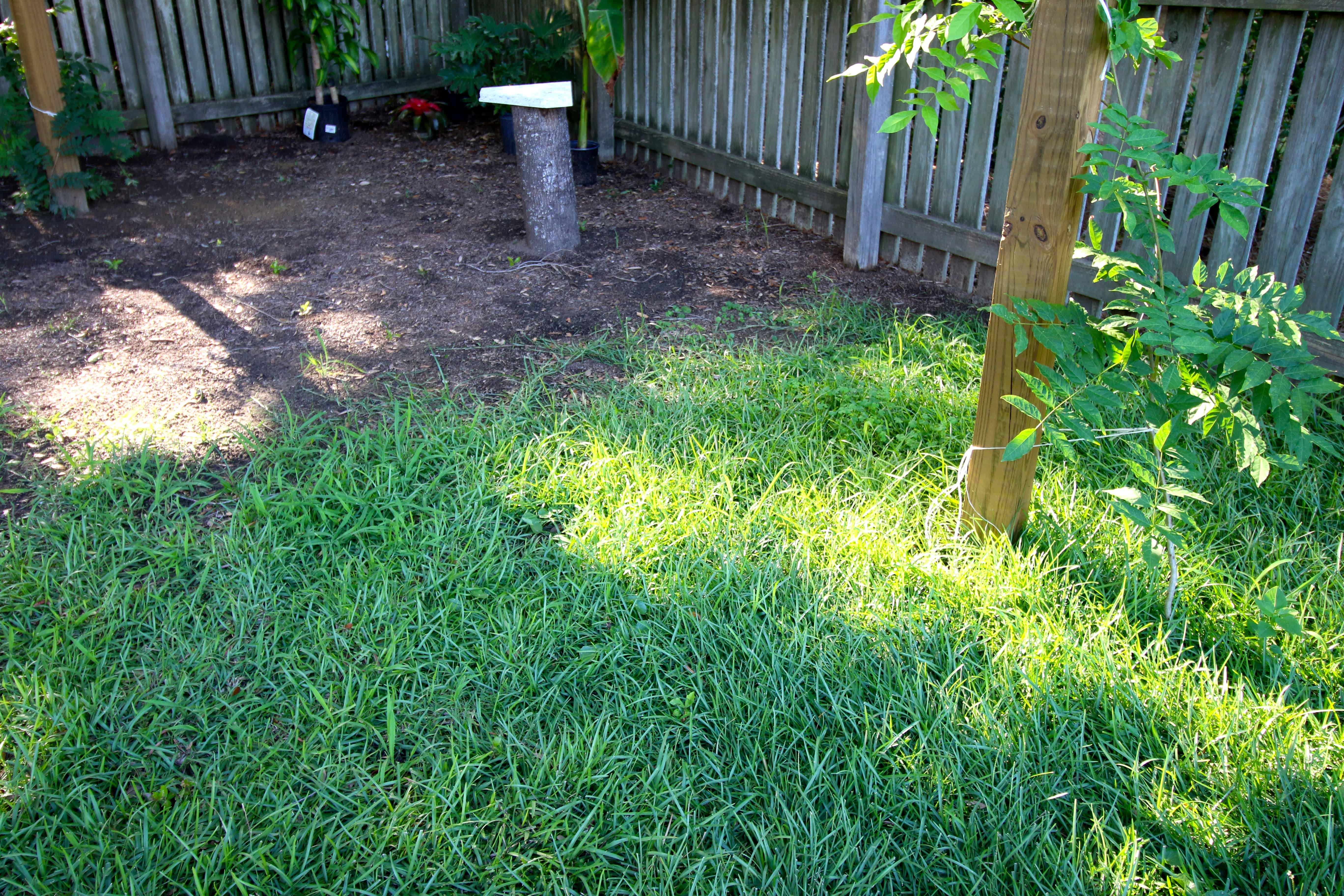 How to transplant grass