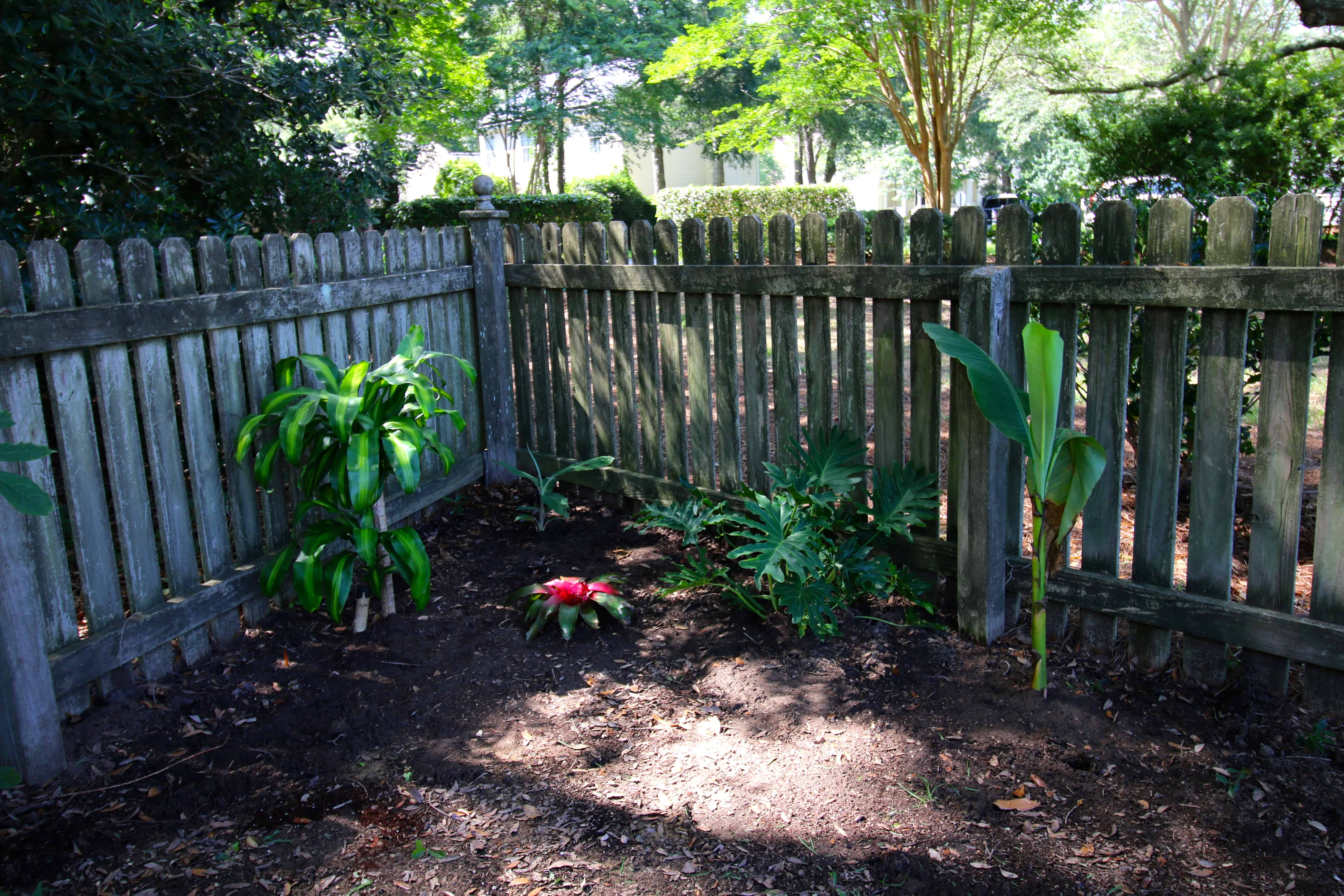 Prepping for our tropical yard corner - Charleston Crafted