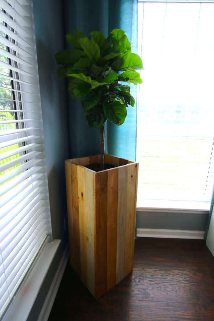 DIY Elevated Plant Stand for Fiddle Leaf Figs and Other Indoor Plants - Charleston Crafted