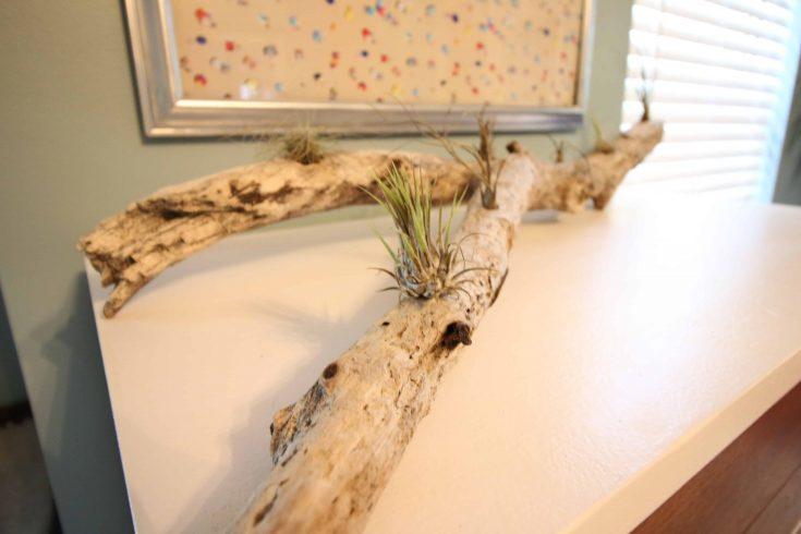 DIY Driftwood Air Plant Planter