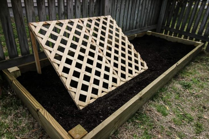 DIY Raised Cucumber Garden with a Trellis