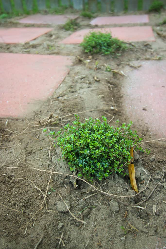Garden Paver Walkway - Charleston Crafted