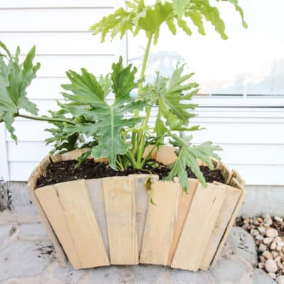 Our Favorite Planter Ideas