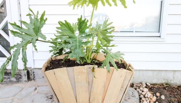 Our Favorite Planter Ideas