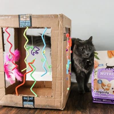 DIY Cardboard Cat Play Box