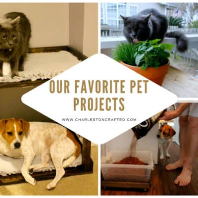 Our Three Favorite Pet Projects